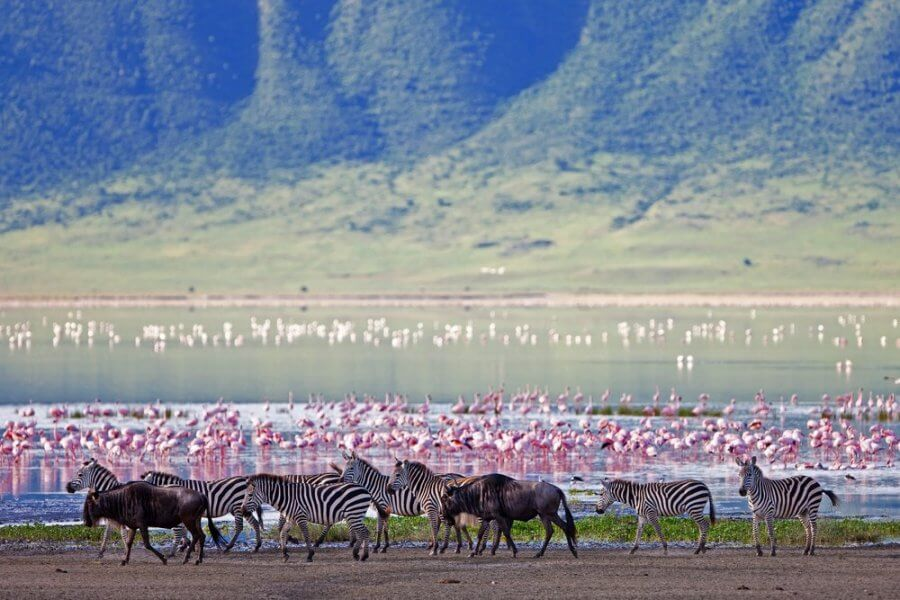 ngorongoro crater wildlife safaris