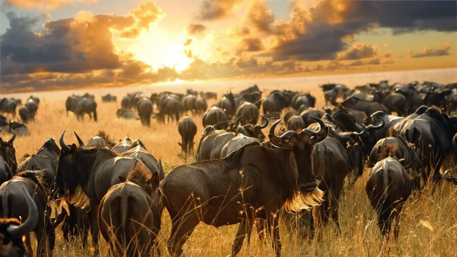 serengeti wilderness migration