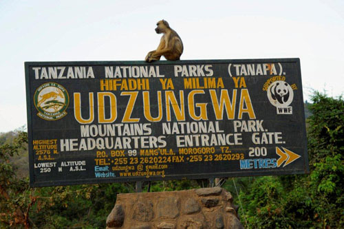 udzungwa-mountains-safari