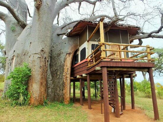 tarangire-tree-lodge