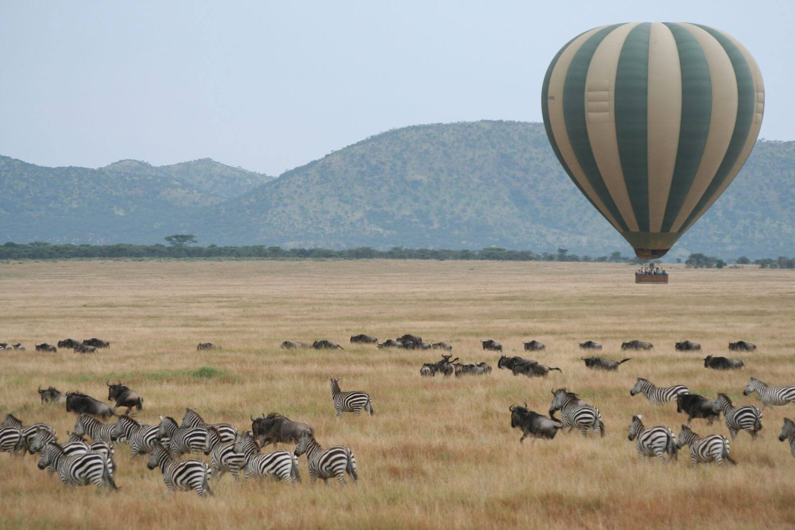 Hot-air-Balloon-safari-and-wildlife-Serengeti