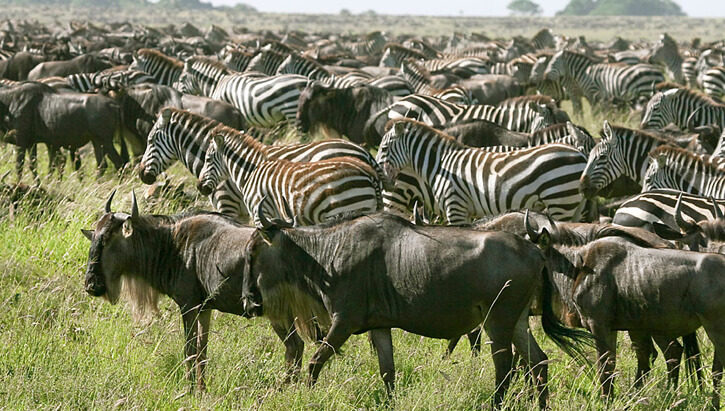Serengeti National Park-migration-safari