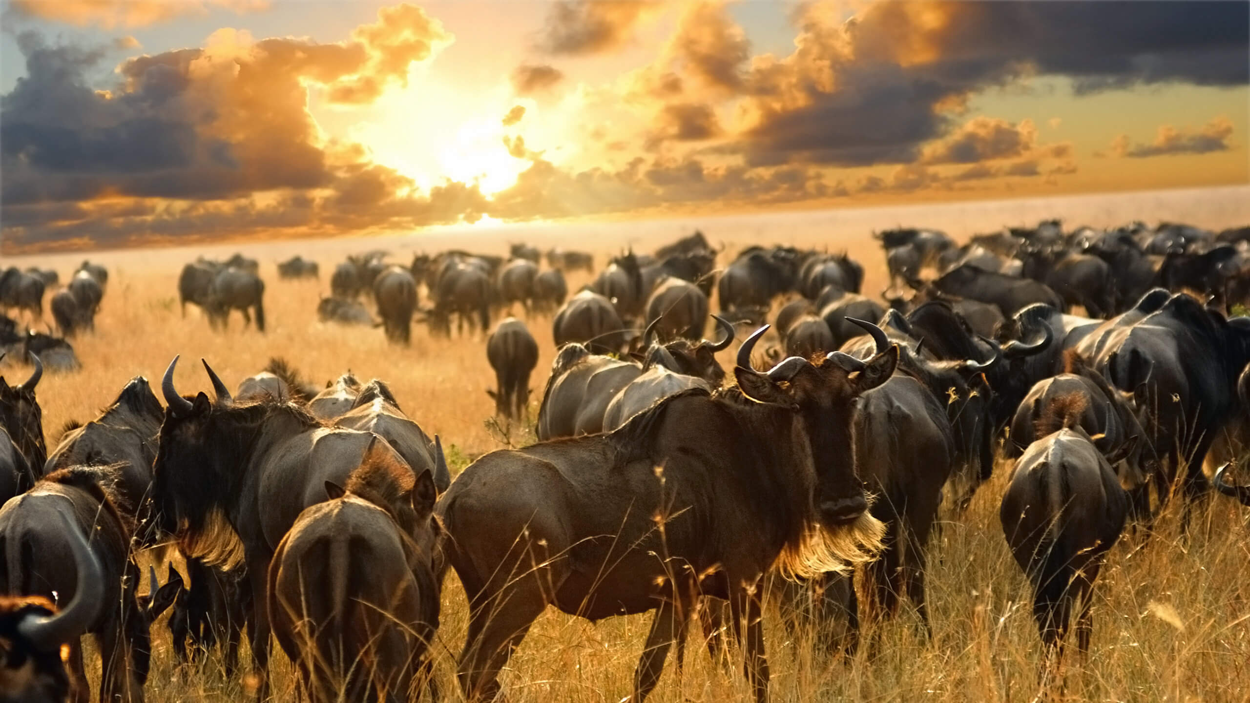 great migration serengeti sun set