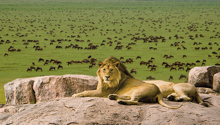 Tanzania Safaris The Great migration safari in serengeti plain